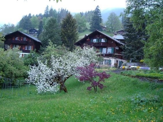 Grindelwald - chalés vista 1