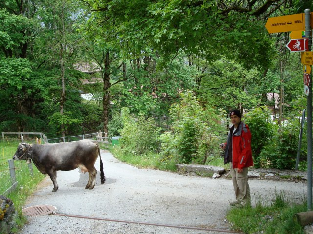 trilha Wengen-Lauterbrunnen