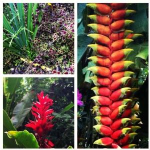 Flora da Serra da Bocaina