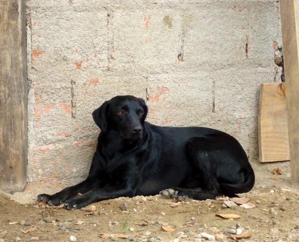 Cachorros de Trindade - fofos, mas longe da areia