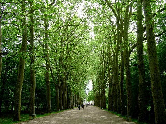 Túnel verde dá as boas vindas em Chenonceau