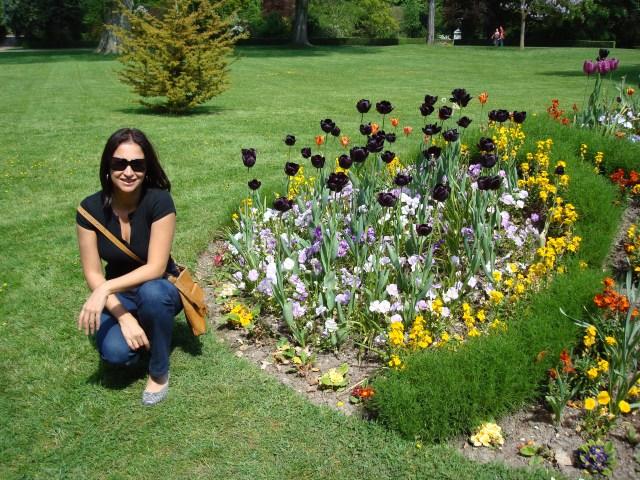 O Jardim do Rei, com suas tulipas negras