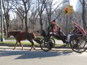 Cavalos rumo à aposentadoria?